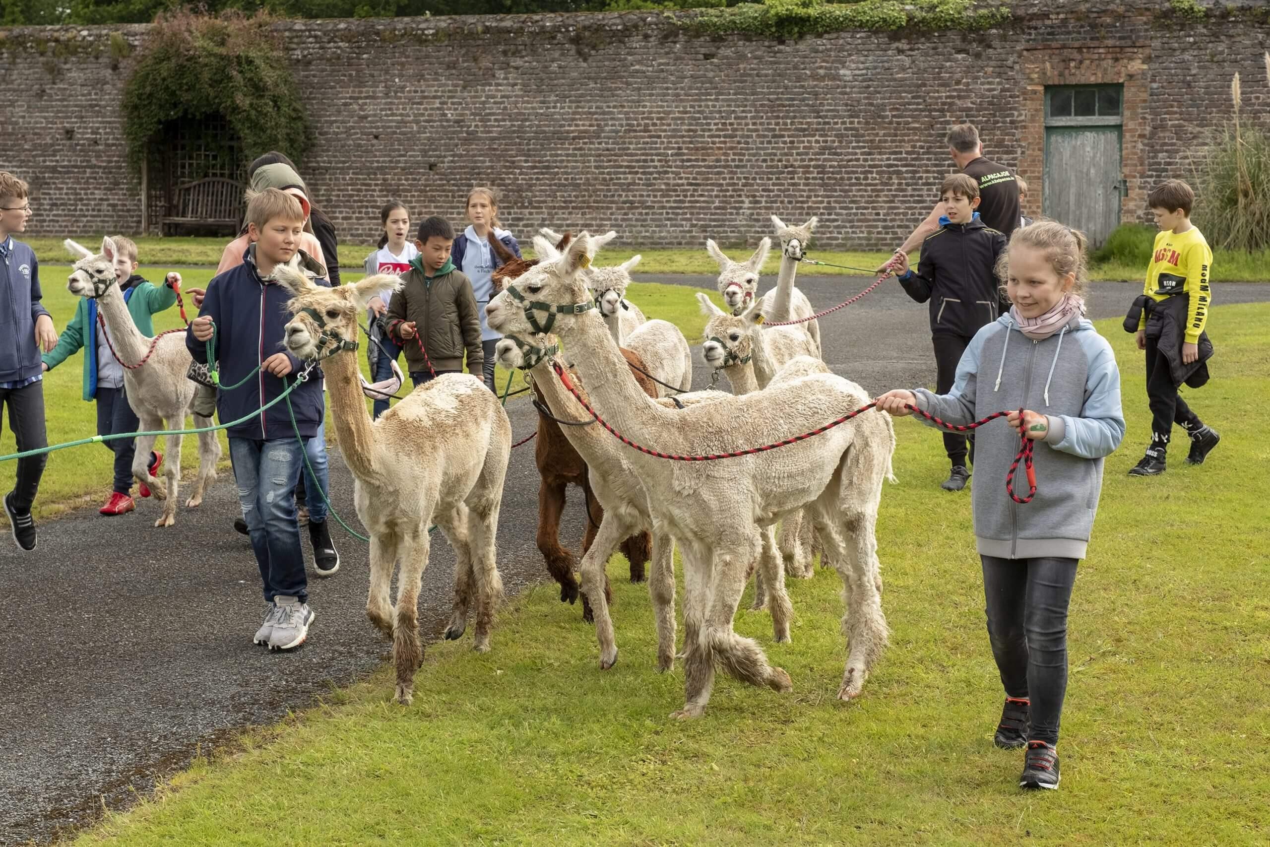 Children Walking Goats
